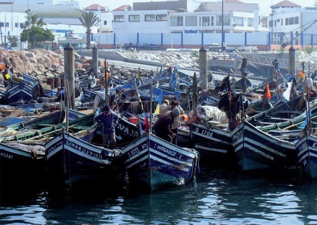 Seuls 36 du poisson p ch au maroc va la consommation en frais agadir blog par michel terrier - Peche du poisson chat au coup ...