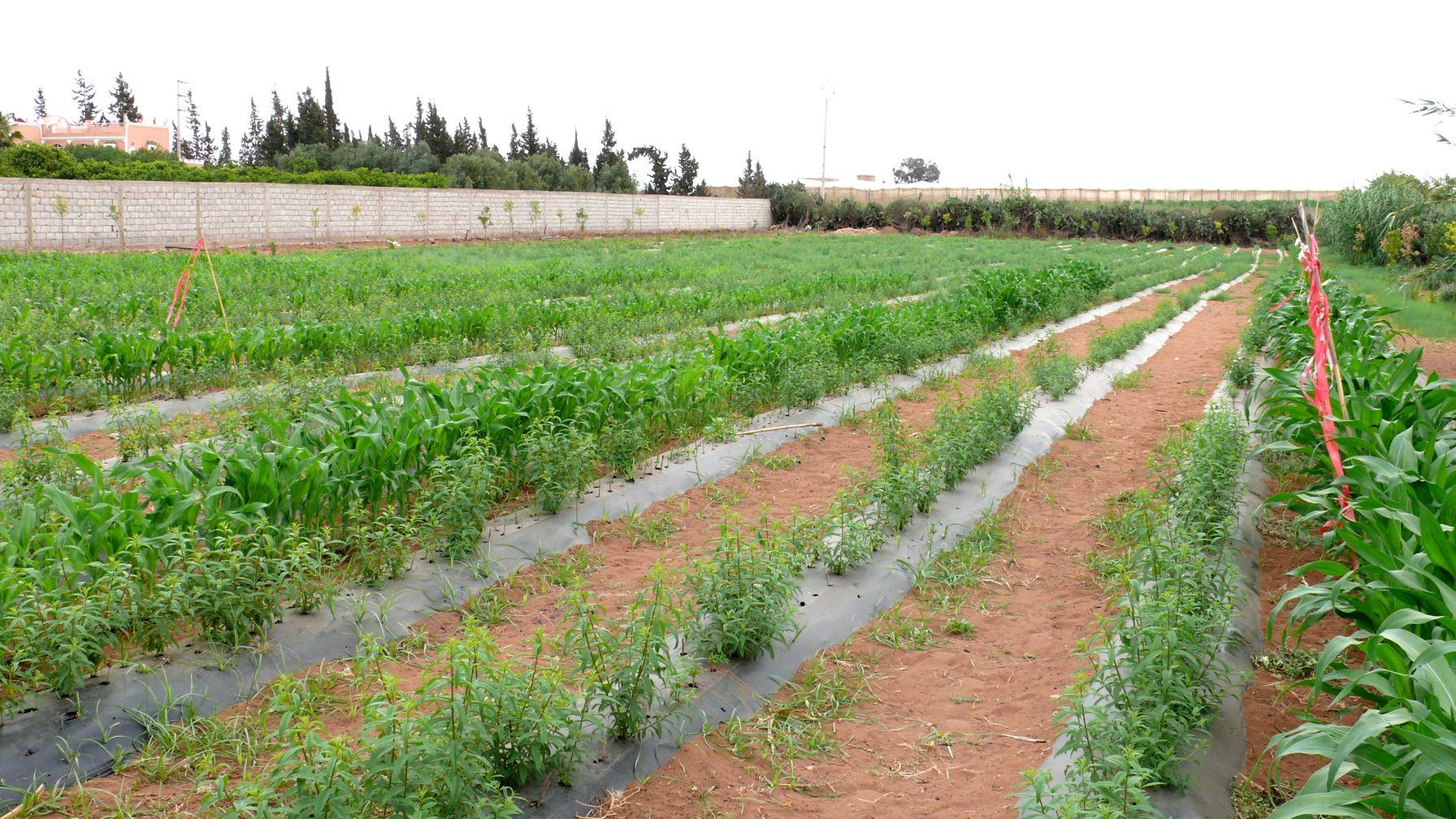 Une agr able visite au jardin de jacky agadir blog par for Au jardin des sans pourquoi