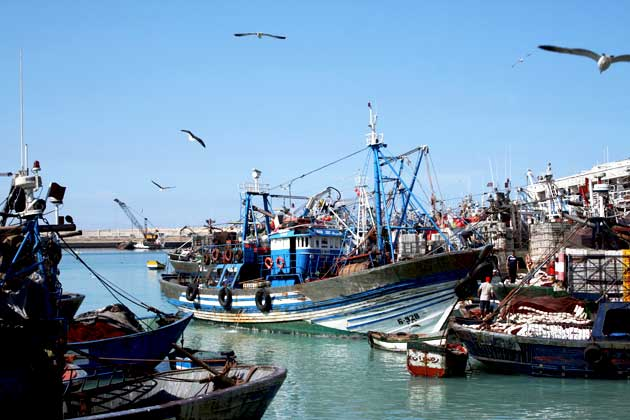 """Résultat de recherche d'images pour """"Agadir ravive son secteur de pêche"""""""