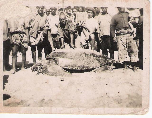 Une tortue péchée à la Madrague
