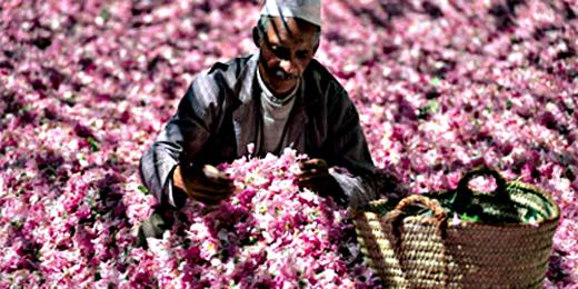 Eaux-Florales-Maroc-(2013-05-28)