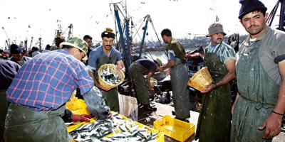 Pêche-au-Maroc-(2013-07-24)