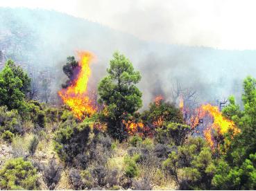L'incendie de la forêt d'Amskroud a remis sur la table la question de lutte et de prévention des feux de forêt, qui ont ravagé plus de 150.000 hectares d'espaces forestiers depuis une cinquantaine d'années