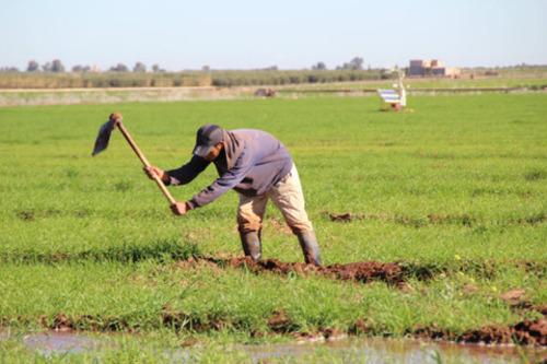 L'agriculture solidaire et l'économie d'eau sont des thèmes chers aux organisateurs d'Agrimeeting. /DR