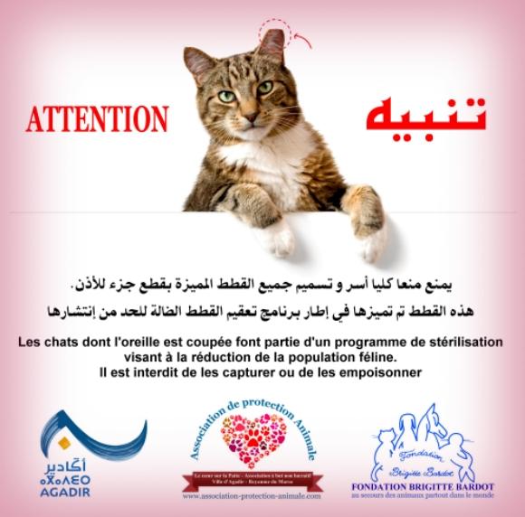 avis-annonce-campagne-sterilisation-chats-chiens-errants-agadir-petit-affiche