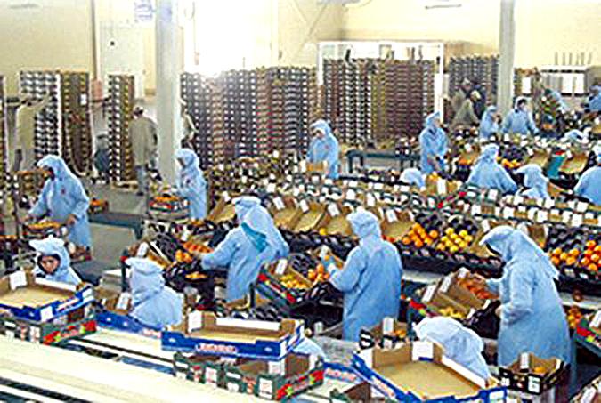En tant que première zone d'exportation de primeurs, le Souss se sent particulièrement en danger dans son activité économique. C'est d'ailleurs de là qu'est donné le coup d'envoi de la mobilisation et des manifestations de réaction de la profession
