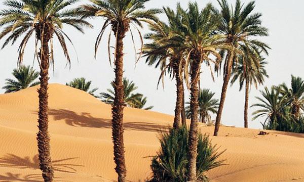 Les oasis fortement menacées par la hausse des températures.
