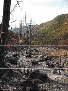 Parmi les mesures qui seront mises en place et afin de lutter contre les incendies de forêts, des tranchées pare-feu seront créées sur trois kilomètres, avec aménagement de points d'eau afin de parer à toute éventualité
