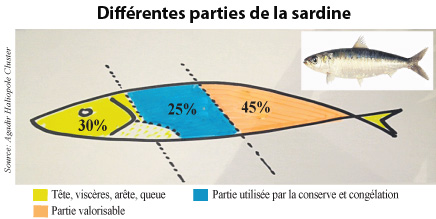 Si la valorisation est étendue à l'extrême, elle peut alors concerner environ 55% des captures.  Pour le moment, seule 45% de la sardine est utilisée par la conserve et la congélation. 25% du corps de la sardine est tout simplement jetée car ne correspondant pas au calibrage des boîtes de conserve. Les 30% restant et qui concerne la tête, les viscères, la queue, les nageoires et les écailles sont susceptibles d'être utilisés mais il faudra que les industriels fassent preuve d'innovation. Dans d'autres pays, des programmes permettent de les optimiser et d'en extraire notamment du collagène.