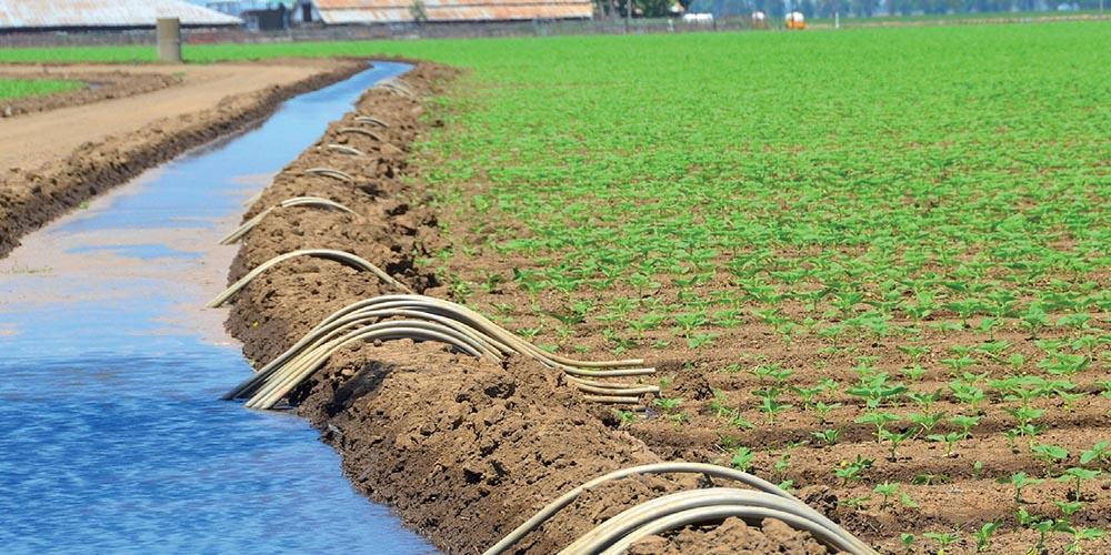 L'accord-cadre définit les règles d'exploitation de la nappe et l'usage de l'eau dessalée. Les agriculteurs se sont engagés à souscrire auprès de l'opérateur du réseau de distribution de l'eau dessalée une quantité minimale égale à 3.600 m3/ha/an. Le prix sera indexé annuellement au coût de l'énergie électrique utilisée pour le dessalement.